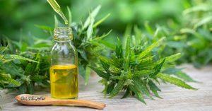 Aumento de procura por cannabis medicinal chama atenção para dificuldade de acesso no Brasil