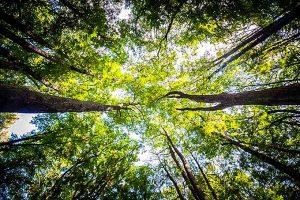 Eurofarma compra créditos de carbono na Amazônia e neutraliza emissões